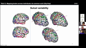 Comparing brains across individuals and species via cortical folding patterns