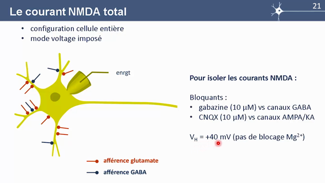 MOOC Neurophysio 4-5 Courant NMDA total (5:48)