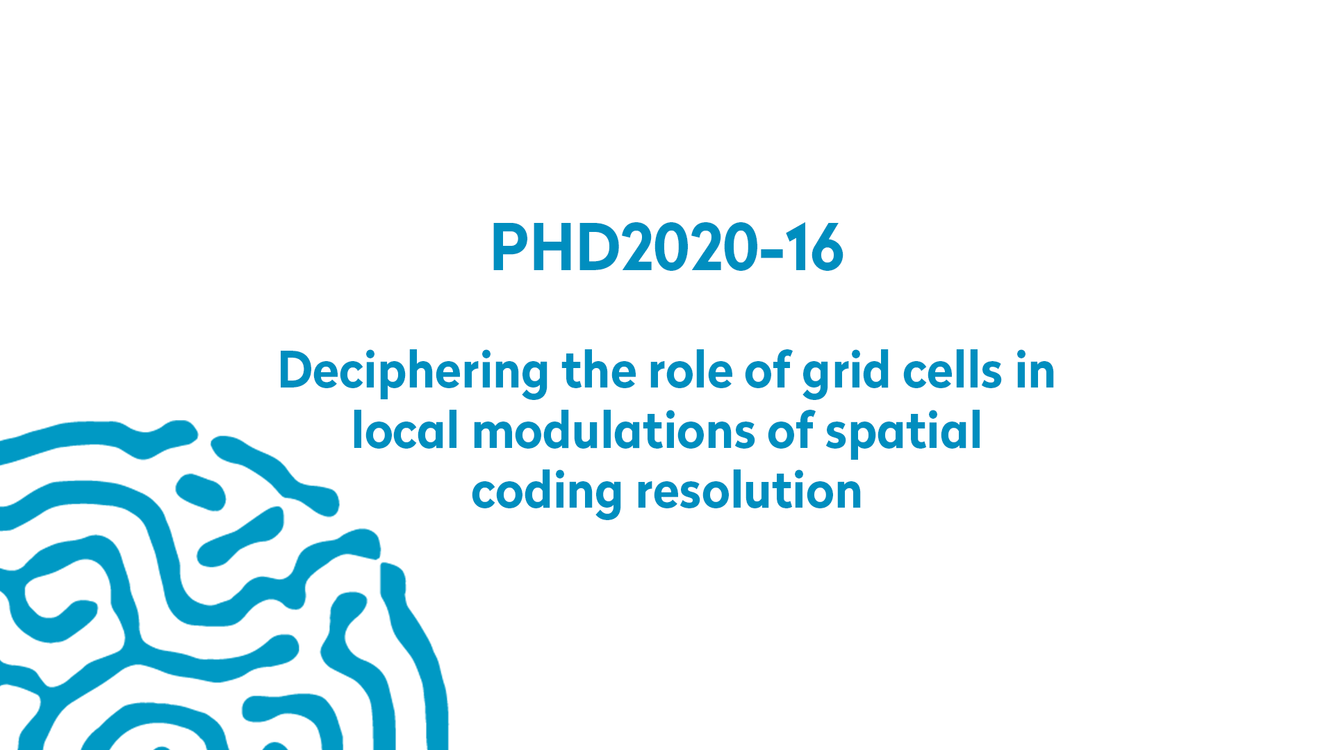 PHD2020-16 | Deciphering the role of grid cells in local modulations of spatial coding resolution